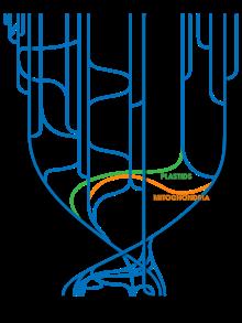 Tree_Of_Life_(with_horizontal_gene_transfer)